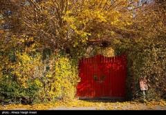 عکس/ نصف جهان به رنگ پاییز