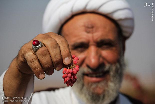 روحانی که کشاورز نمونه شد +عکس