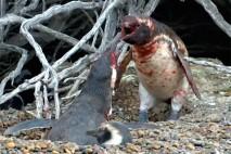 فیلم دعوای خونین پنگوئن ها
