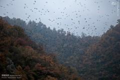 عکس/ طبیعت پاییزه پارک ملی گلستان