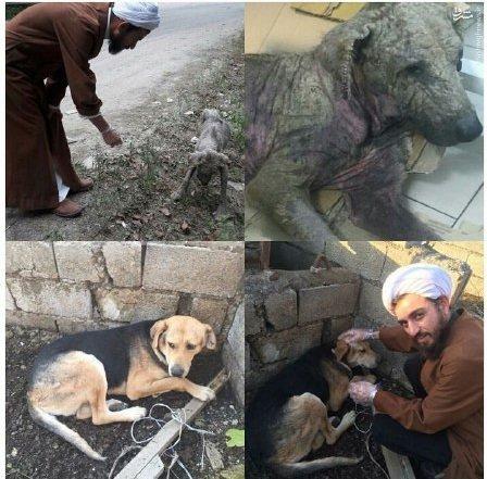 طلبهای که حامی سگهای ولگرد شد +عکس