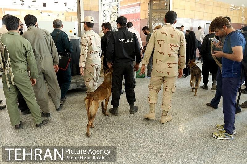 عکس/ سگهای بمبیاب در مرز شلمچه
