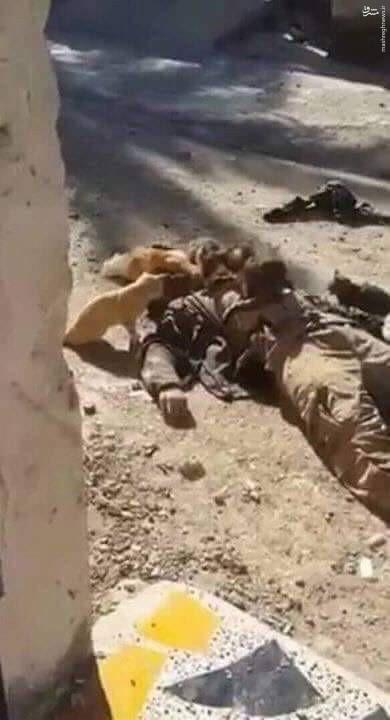 عکس/ لاشهی یک داعشی خوراک گربهها شد!