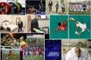 رونمایی از جانشین گودرزی و خبر بد برای پرسپولیسیها