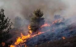 قتل عام 42 هزار نفر در سه ساعت/ آتش جنگلی که چند کشور را میسوزاند