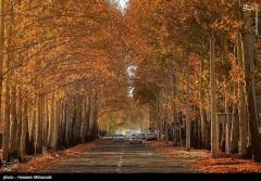 عکس/ طبیعت پاییزی قزوین