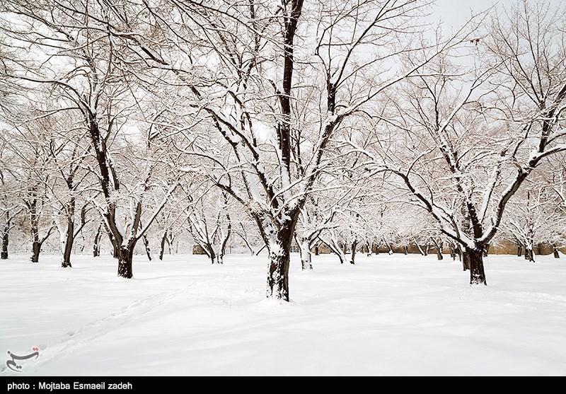 تصاویر/ بارش برف در ارومیه