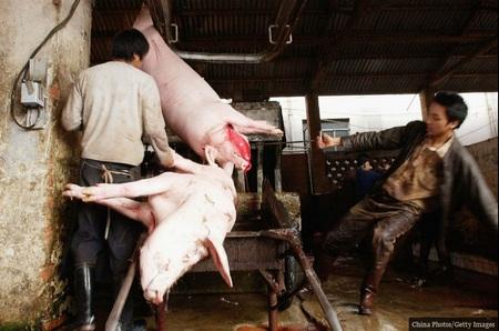 کشتارگاه خوکها