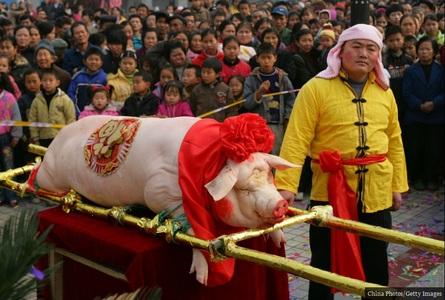 آرایش و تزئین خوکهای کشته شده در جشنی موسوم به