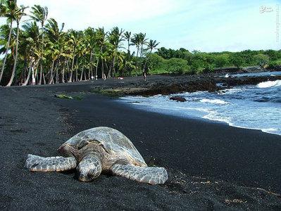 شن های سیاه این ساحل در هاوایی توسط سرد شدن سریع گدازه های بازالت که منفجر شده و به دریا جریان یافته تشکیل شده است.