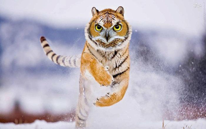 عکس/ ترکیب حیوانات با فتوشاپ