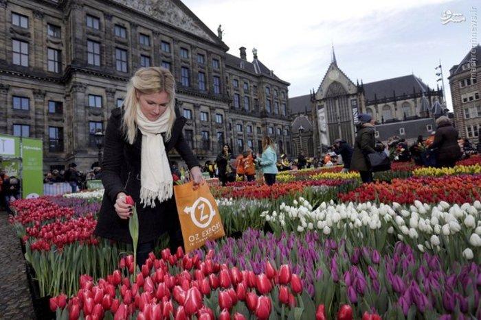 عکس از کشور هلند