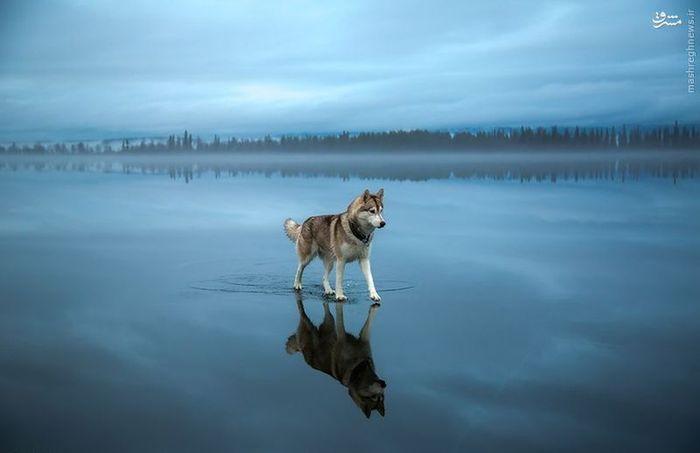 عکس های زیبا عکس های جالب و زیبا عکس حیوانات