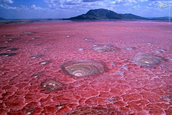 این دریاچهی نمکی و قلیایی در منطقهی Arusha در کشور تانزانیا قرار دارد. این دریاچه به دلیل وجود سیانوباکتریها، رنگ صورتی منحصربهفردی دارد. محیط دریاچه بسیار ناملایم است و حتی ممکن است پوست جانورانی که به این آبوهوا عادت ندارند را بسوزاند. البته این دریاچه، حیات وحش کوچکی را پوشش میدهد. فلامینگوهای صورتی به این منطقه رفتوآمد میکنند.