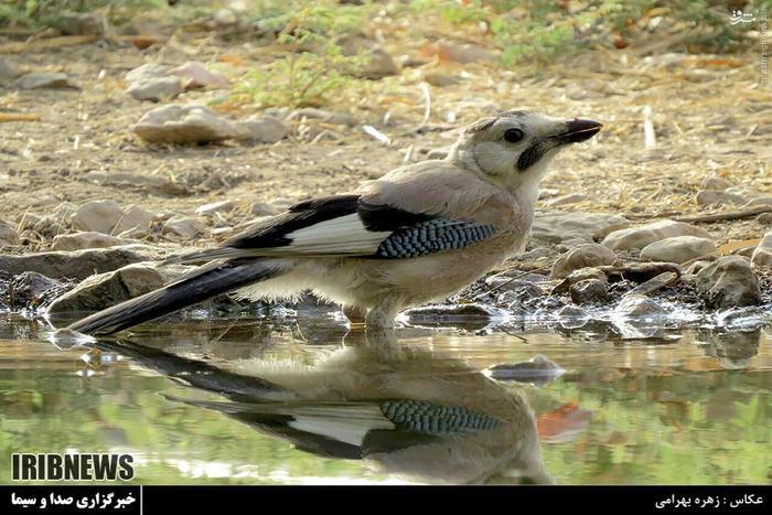 عکس/ سرشماری حیات وحش در کهگیلویه و بویراحمد