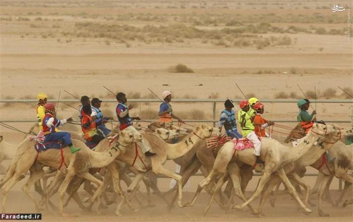مسابقه شتر سواری در ریاض
