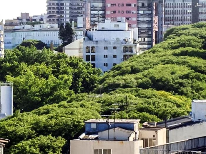عکس برزیل زن برزیلی دختر برزیلی توریستی برزیل پورتو آلگره
