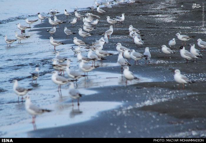 resized 1614929 216 عکس/ ساحل بندر انزلی