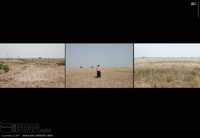 از سمت راست به چپ 1- یکی از مزارع گندم که محصولش از بین رفته است، بیشه حمید آباد از توابع دزفول 2- هانی زبیدی ازاهالی روستای لازم در منطقه چغامیش دزفول که 7 هکتار گندم و 4 دامش را از دست داده است. 3- مزرعه گندمی در روستای دحول در منطقه شعبیه شوشتر که تمام محصولش را از دست داده است.