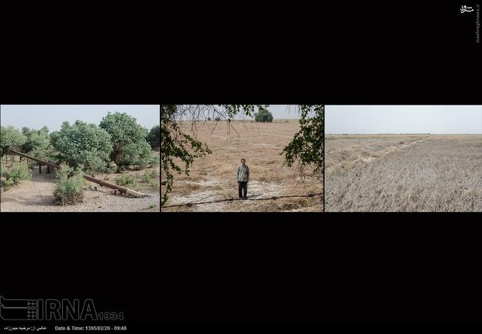 از سمت راست به چپ 1-مزرعه شبلی مزرعه 3 در بخش شاووراز توابع شوش که تمام محصولش از بین رفته است.2 - کاظم فرج الله چعب 5 هکتار گندمش از بین رفته است، روستای دحول در منطقه شعبیه شوشتر است .3- خط گاز اهواز - شوشتر که از میان جنگل می گذرد .