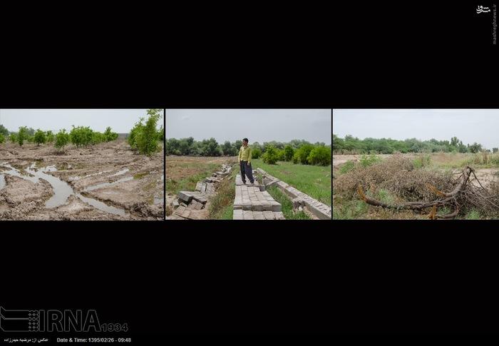 از سمت راست به چپ 1- باغی آسیب دیده در بیشه حمید آباد از توابع دزفول می باشد.2 - جمشید حیدرپور باغدار- 5 هکتار گندم و 8 باغ میوه اش آسیب دیده است. 3- باغی آسیب دیده در بیشه حمید آباد از توابع دزفول می باشد.