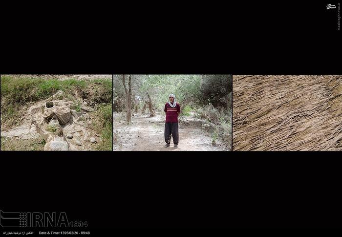از سمت راست به چپ 1- یکی از مزارع گندم که محصولش از بین رفته - بیشه حمید آباد از توابع دزفول است. 2- عبدالرضا شریف منش 30 هکتار گندم با برادرانش شریک بوده که تمامش از بین رفته است.3- باغی آسیب دیده در بیشه حمید آباد از توابع دزفول می باشد.