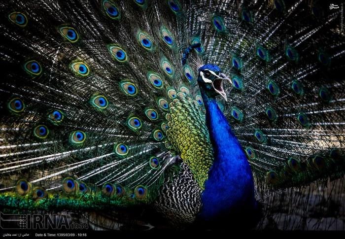 تصاویر بسیار زیبا از باغ پرندگان اصفهان