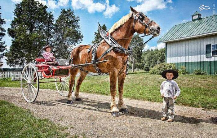 جیک بلند ترین اسب زندگی  9 ساله و اهل بلژیک می باشد که ارتفاع این اسب 210.19 سانتی متر است .