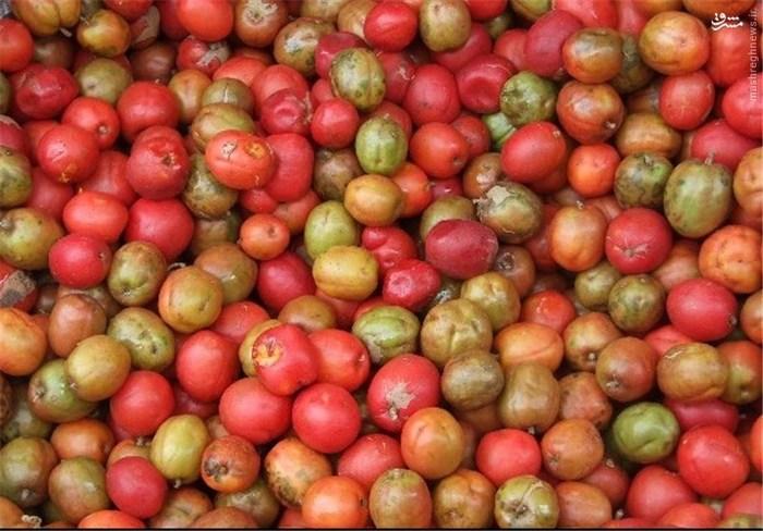سیریگوئلا: از خانواده بادام زمینی است و یک میوه بسیار محبوب در شمال شرق برزیل محسوب میشود. فیبر، کربوهیدراتها، کلسیم، فسفر، پتاسیم، ویتامین B1 و C در این میوه وجود دارد.