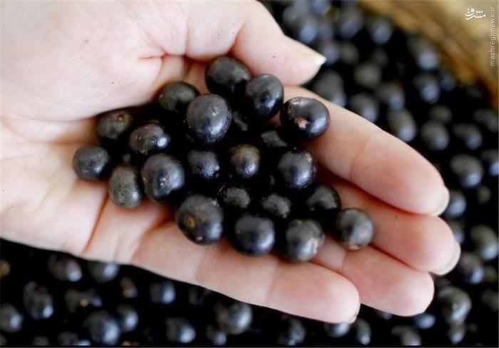 آکای: این میوه بسیار محبوب، بومی منطقه آمازون است و یک منبع خوب و سریع از انرژی محسوب میشود. از این میوه در نوشیدنیها، آب میوهها و محصولات مرتبط با کاهش وزن استفاده میشود.