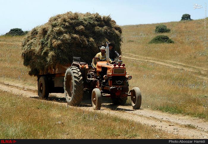 تصاویر علوفه٬ تصاویر کشاورزی٬ عکس های دامداری