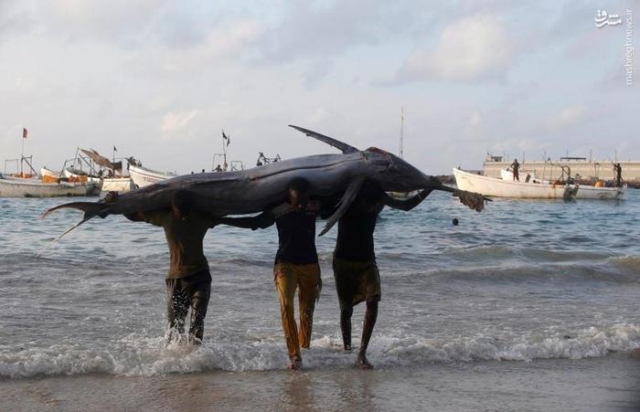 صید بزرگ ماهیگیران در موگادیشوی سومالی