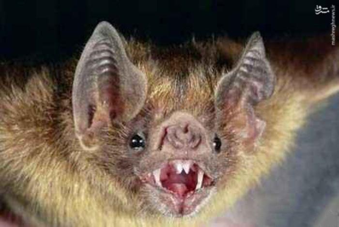 خفاش؛ خفاش خون آشام احتمالا مشهورترین خون خوارهاست و همچنین تنها پستانداری است که منبع غذای اصلیش فقط خون است. این خفاش ها شب زی هستند، کل روز را در داخل غارها به همراه صدها عضو دیگر خانواده خود می خوابند و شب ها برای شکار بیرون می آیند.خفاش های خون آشام عموما از خون پستانداران تغذیه می کنند.