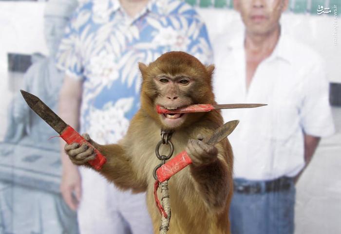 این میمون در مزرعه ای در چین با مهارت عجیبی که در استفاده از چاقو دارد توانسته یکی از عجیب ترین تصاویر امسال رویترز را به نام خود ثبت کند.