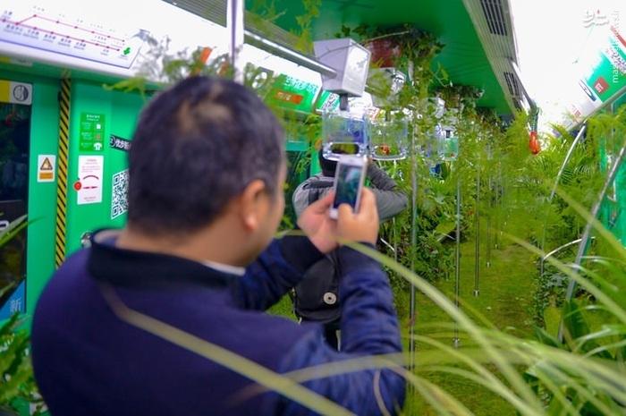 جنگل درون مترو,مترو جنگلی در چین,مترو پر از گل و گیاه, تزئین مترو با گل و گیاه, مترو چین