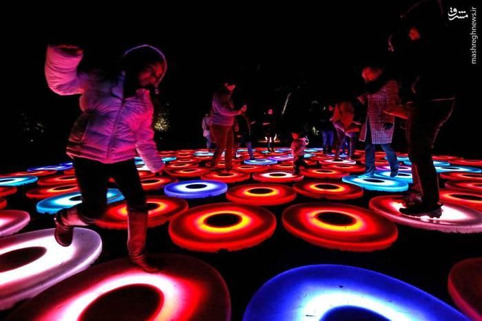 تفریح مردم در «جنگل نور»، کالیفرنیا