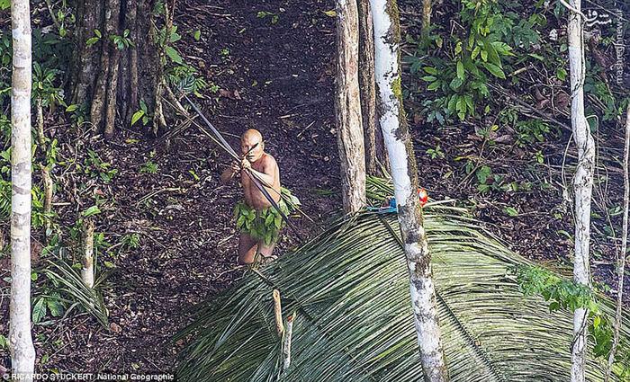 عکس های جالب و زیبا عکس جنگل جنگل آمازون توریستی برزیل انسان های اولیه اخبار برزیل
