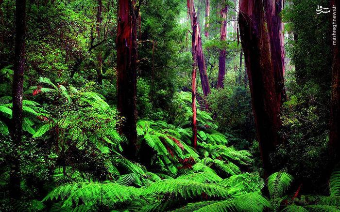 عکس طبیعت عکس زیبا عکس جنگل جنگل آمازون