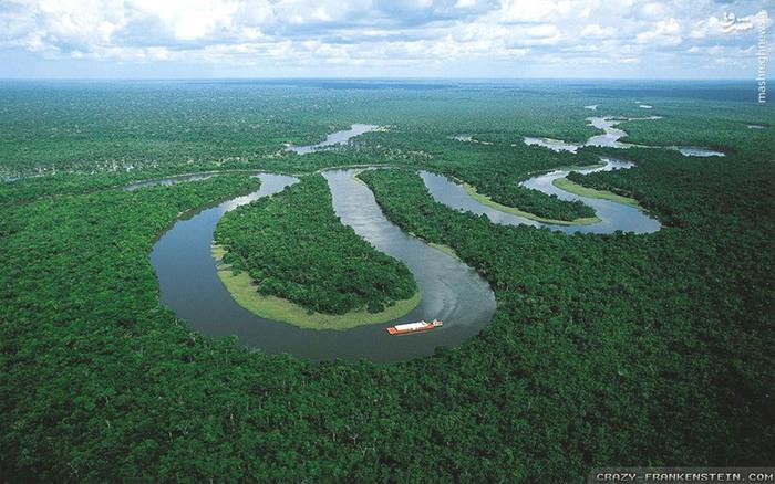 عکس های زیبا عکس طبیعت عکس جنگل جنگل آمازون