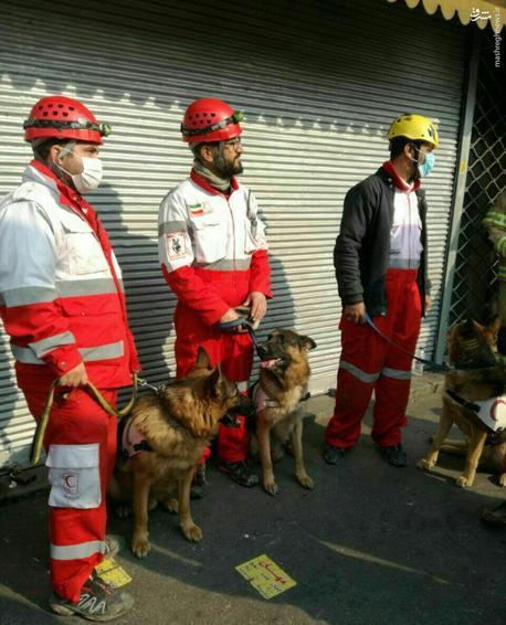 عکس/ سگهای زندهیاب در محل ریزش ساختمان پلاسکو