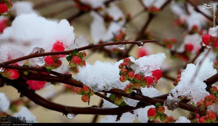 عکس/ بارش برف در انزلی|2782495
