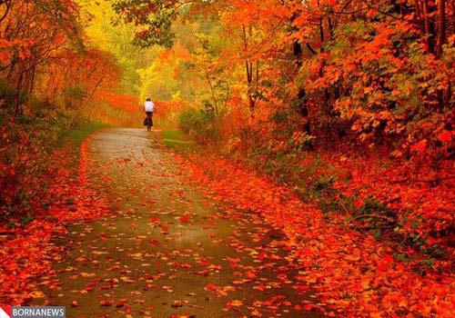 تصاویر/ بازی رنگها در   فصل    پاییز