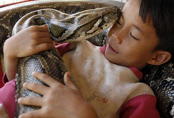 یک مار پیتون وحشتانک، عاشق یک پسر شده است!! + عکس www.TAFRIHI.com