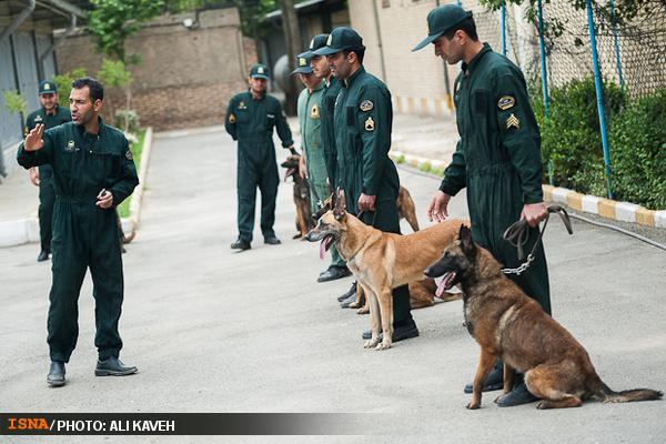 عکس سگ اصفهانی