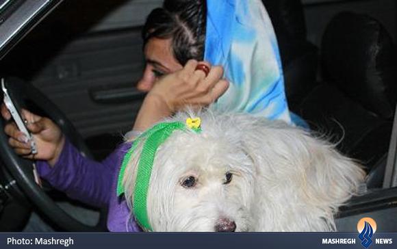 فقط خرید و فروش این سگها حلال است/ چرا نباید در خانه سگ نگه داشت؟