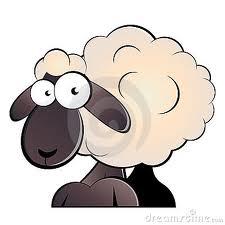 افتخار صادرات گوسفند از استرالیا به ایران