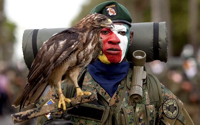 عکس/ سرباز پرنده باز