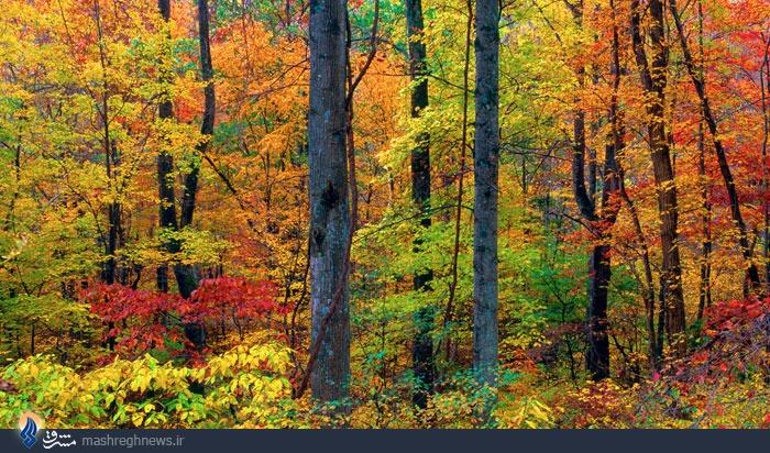 طلای سبز در دست دوستداران طبیعت