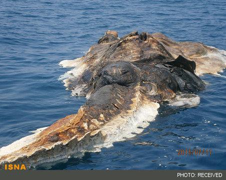 هیولا یا نهنگ خلیج فارس