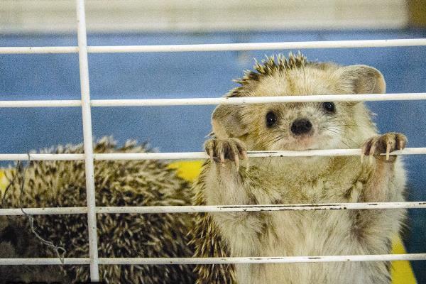 ایستگاه نجات حیوانات +عکس - مشرق نیوز